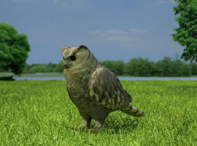 Eurasian Eagle-Owl Bubo Bubo3D model