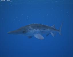 atlantic sturgeon acipenser oxyrhynchus 3d model max obj 3ds fbx c4d lwo lw lws