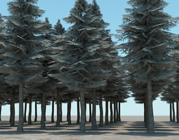 3D Tall Evergreen Trees