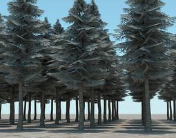 3D Tall Evergreen Trees
