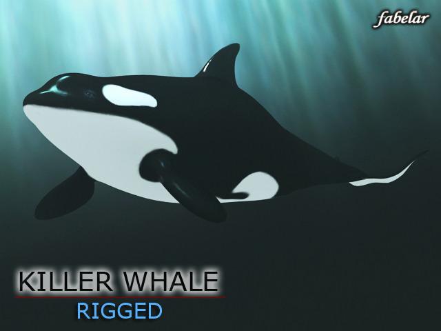 Killer whale3D model