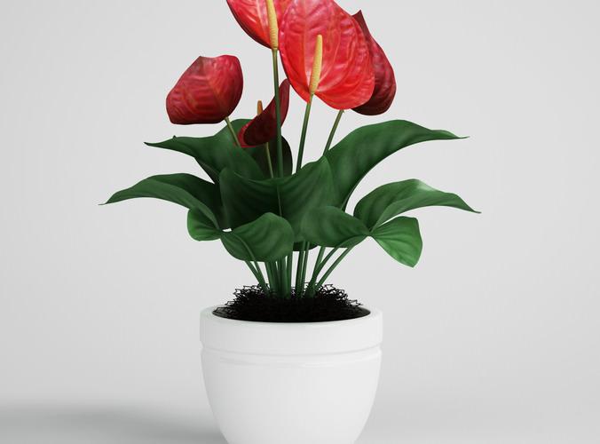 CGAxis flower 233D model