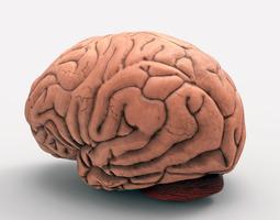 3d print model the brain