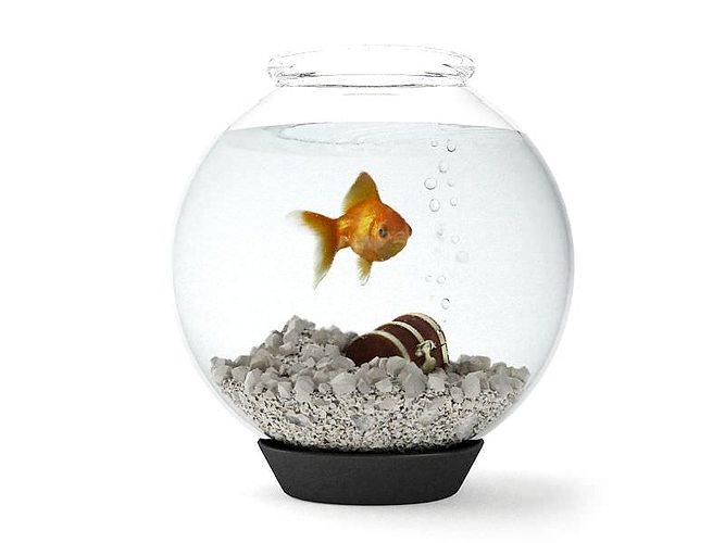 round glass fishtank on black base 3d model obj 1