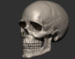 3D print model Skull