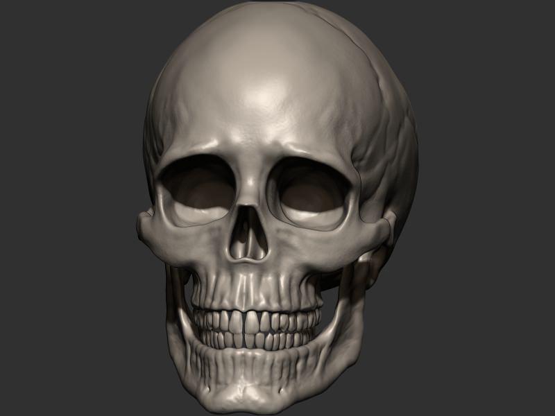 Skull 3d Model 3d Printable Obj Stl Cgtrader Com