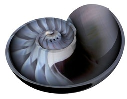 animated 3d model spiral nautilus shell