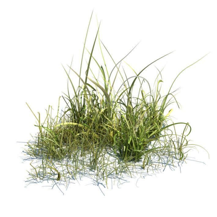 Free Grass 3D Models