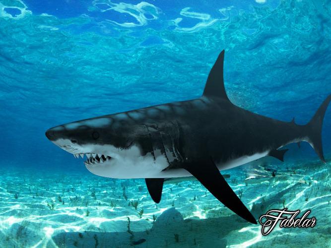 Great white shark3D model