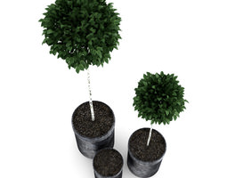 potted birch-trees 3d