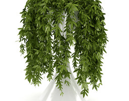 Climbing Plant other 3D model