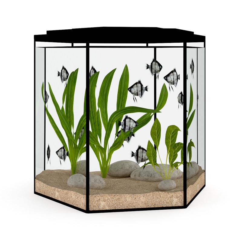 Hexagonal aquarium 3d model max obj fbx c4d for Hexagon fish tank