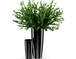 3D model Plant in Black Pot
