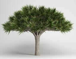 Canary Islands Dragon Tree 3D model