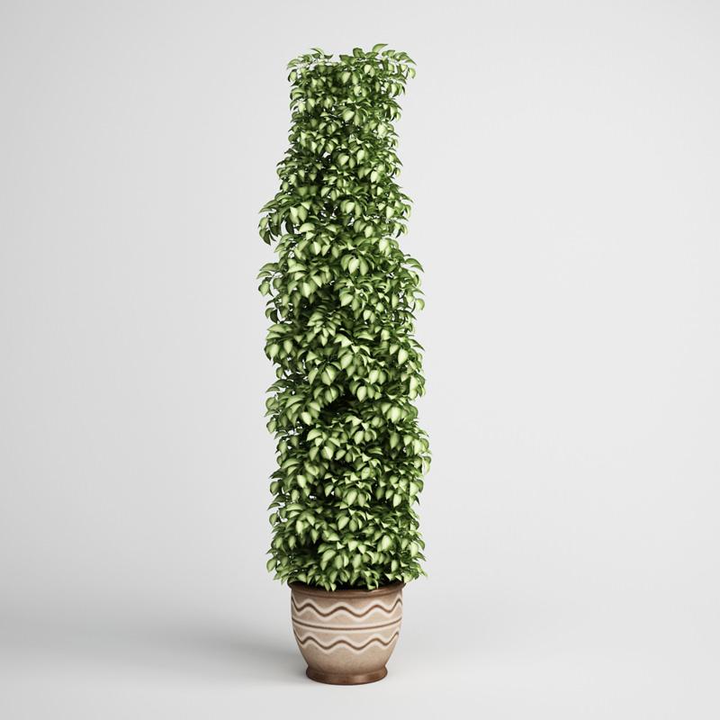 tall plant in pot 17 3d model max obj fbx c4d 1