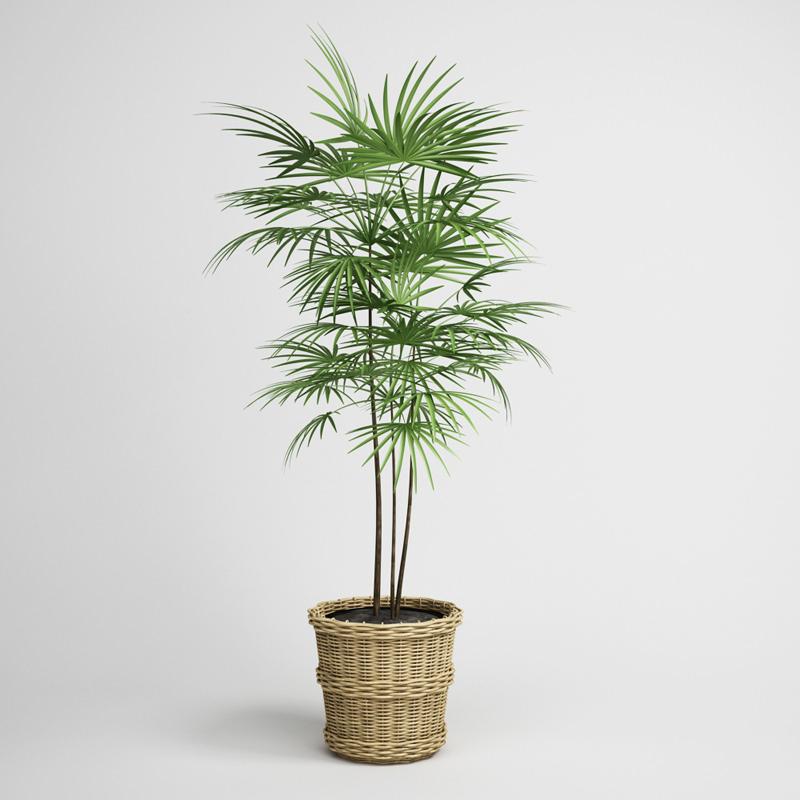 Potted Palm Tree 16 3d Model Max Obj Fbx C4d Cgtrader Com