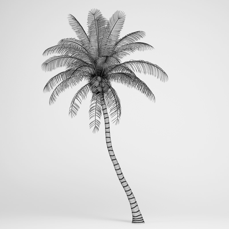 coconut tree 3d model free download | theeliasongroup com