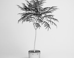 3D Potted Tree 19
