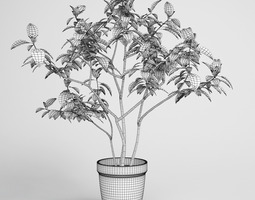 potted plant 08 3d model