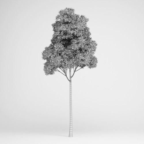Sugar Gum Tree3D model