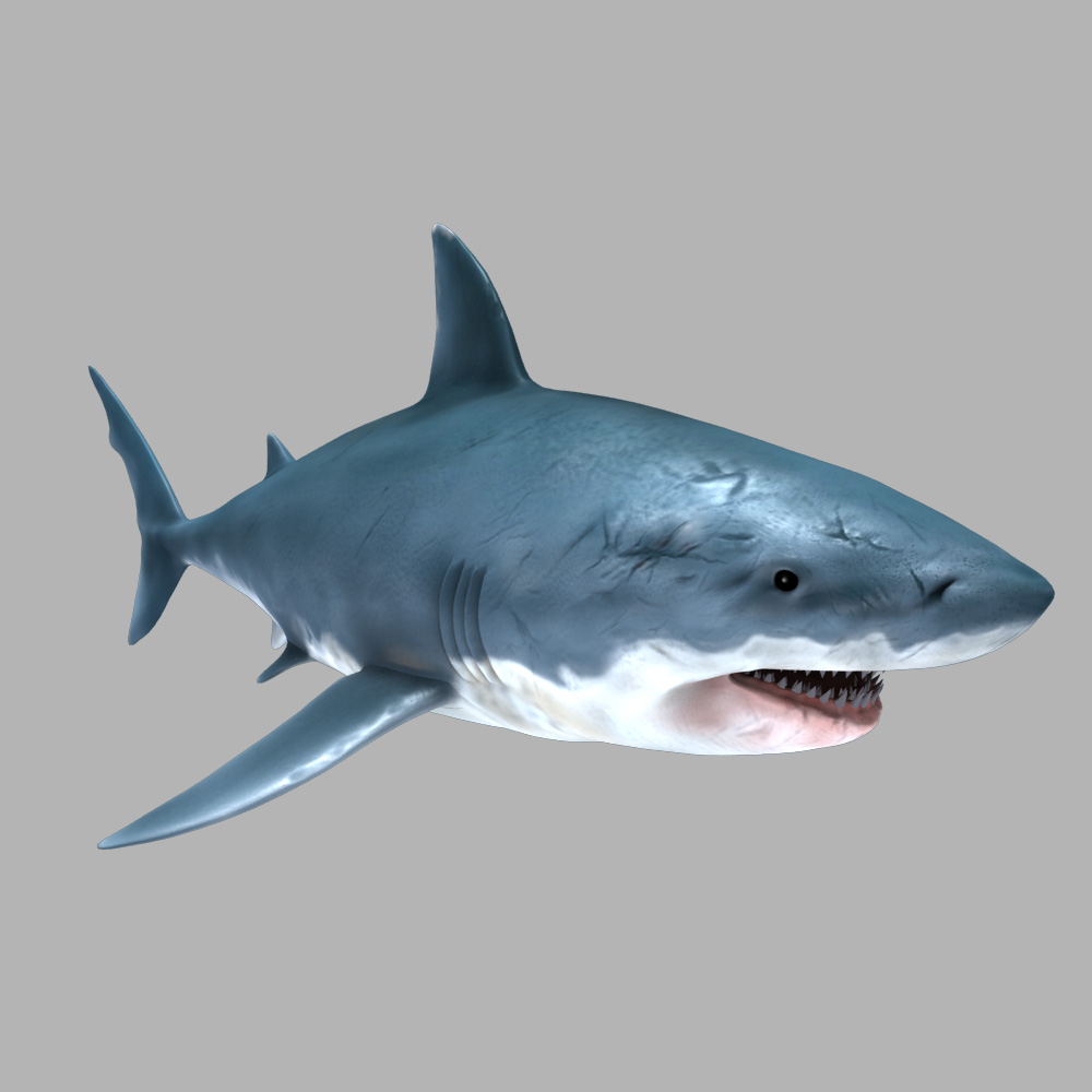 low poly shark model pdf