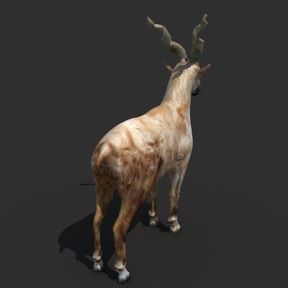 3ds max 2010 v ray 2 40 03 file formats fbx obj dog beds -  Mountains Goat 3d Model Max Obj Fbx 2