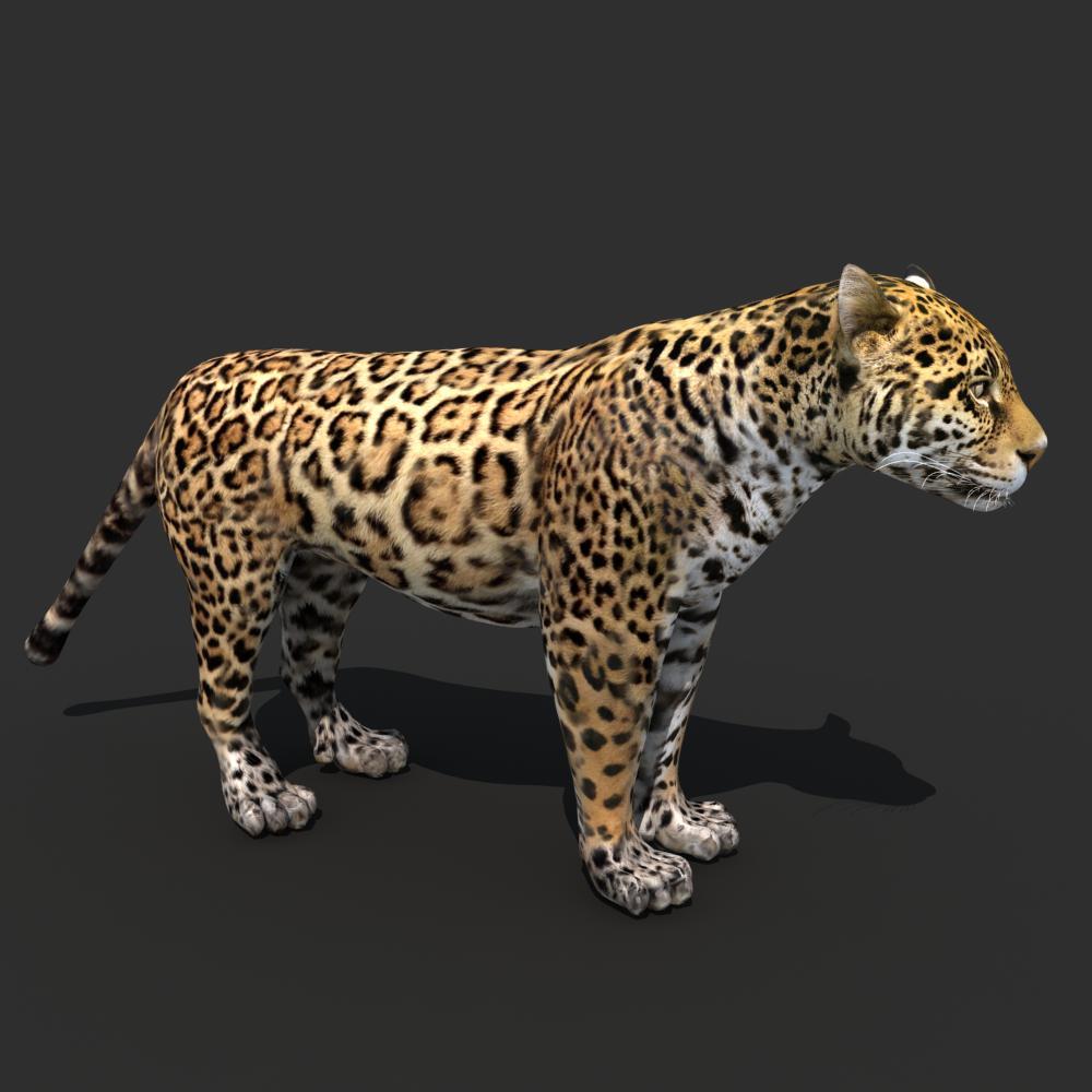 Cheetah Fur Close Up Jaguar 3D Model .max ....