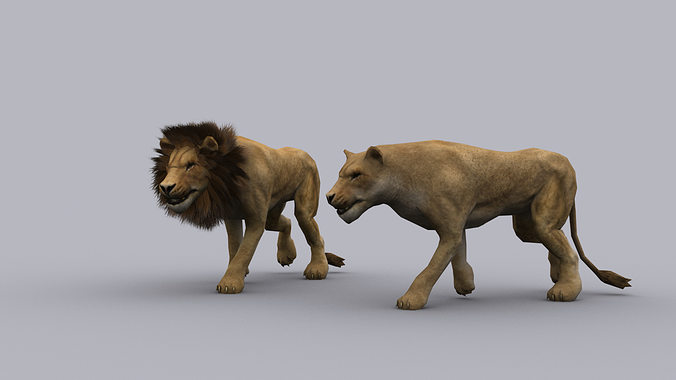 lion game ready animated model 3d model low-poly max 1
