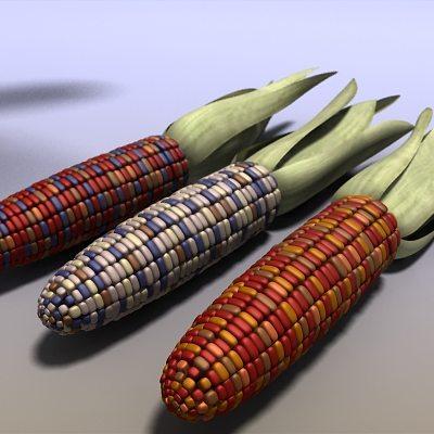 indian corn 3d model max obj mtl 3ds c4d ma mb 1