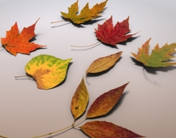 Autumn Leaves 3D model