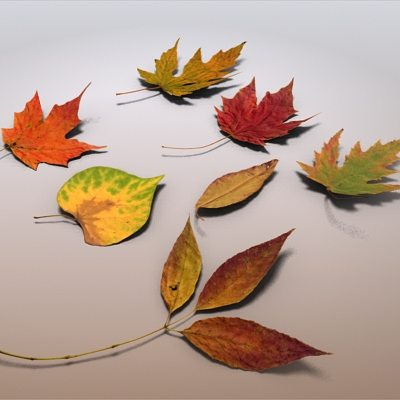autumn leaves 3d model max obj 3ds fbx c4d lwo lw lws 1