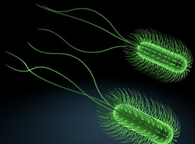 Escherichia coli bacteria 3D Model .obj .3ds .fbx .c4d ...