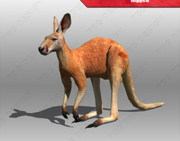 3d model animated kangaroo