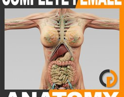 Human Female Anatomy - Body Muscles Skeleton Internal Organs and Lymphatic 3D Model