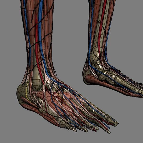 Female surface anatomy