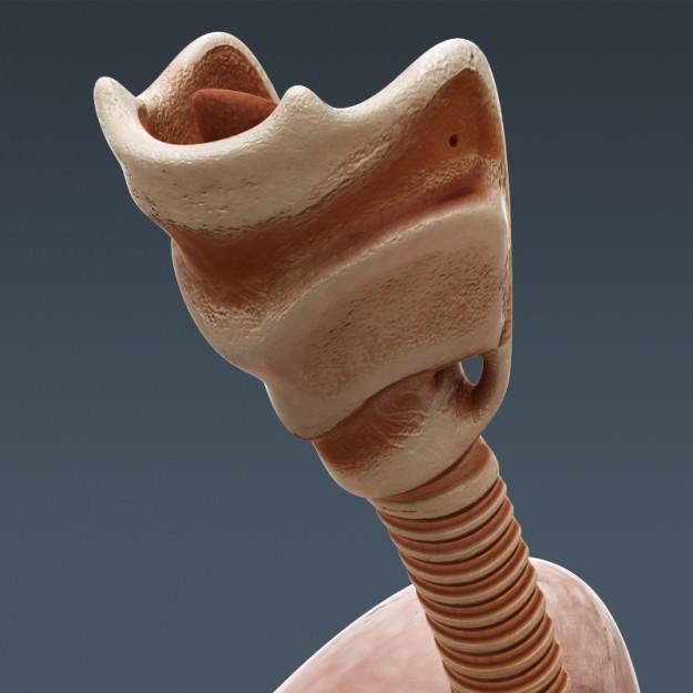 Human Male And Female Complete Anatomy - B 3D Model Max Obj 3Ds Fbx C4D Lwo -3897