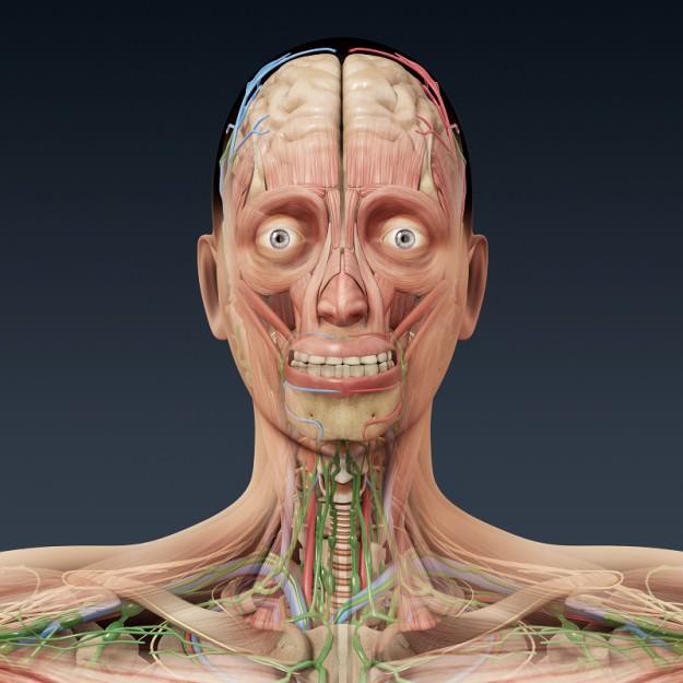 Female Anatomy Internal Organs Human Body