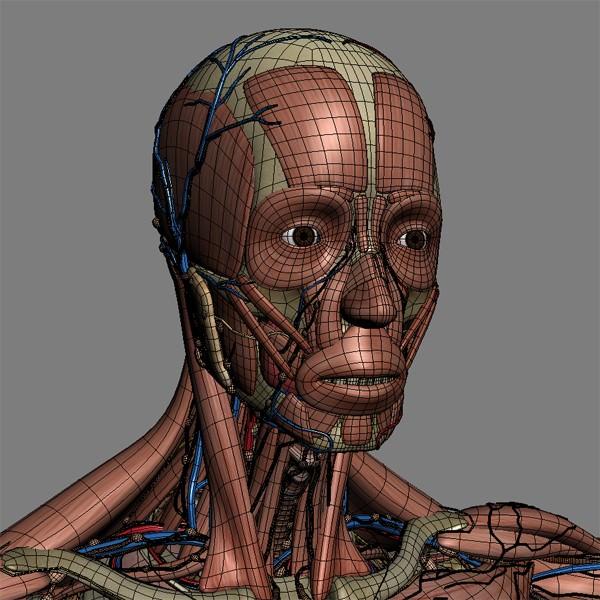 Human Male And Female Complete Anatomy - B 3D Model Max Obj 3Ds Fbx C4D Lwo -8738