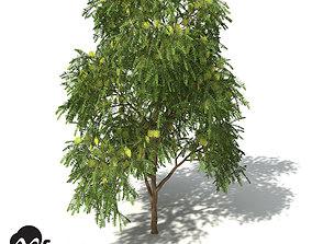 XfrogPlants Green Honey Myrtle 3D
