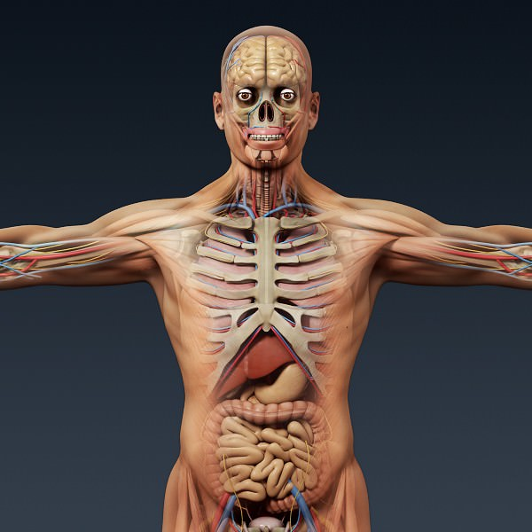 3d free human model: