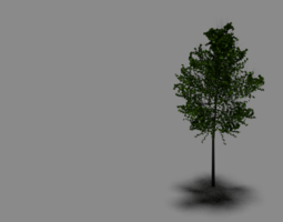 3D model RIGGED TREE D