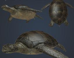 3d asset low-poly sea turtle