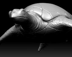 sea turtle zbrush model