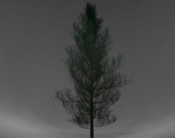 Realistic Pine Tree 3D