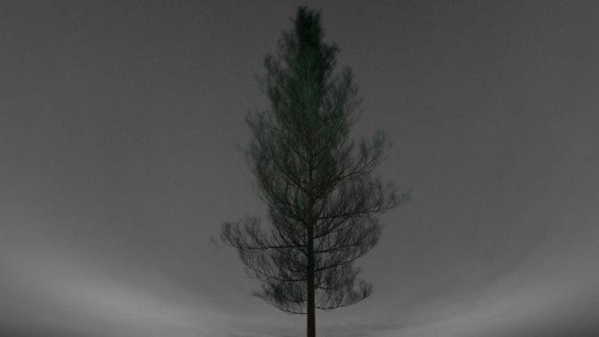 Realistic Pine Tree3D model
