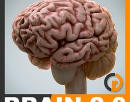 Anatomy - Brain 2 0 3D Model