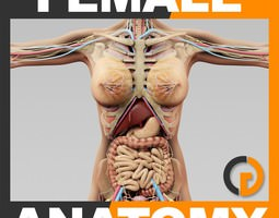 Human Female Anatomy - Body Skeleton and Internal Organs 3D Model