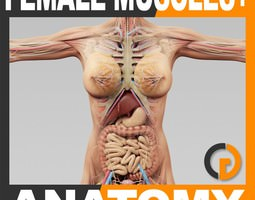 Human Female Anatomy - Body Muscles Skeleton and Internal Organs 3D Model