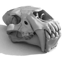 Saber-toothed tiger ( Homotherium ) Full skull 3D Model