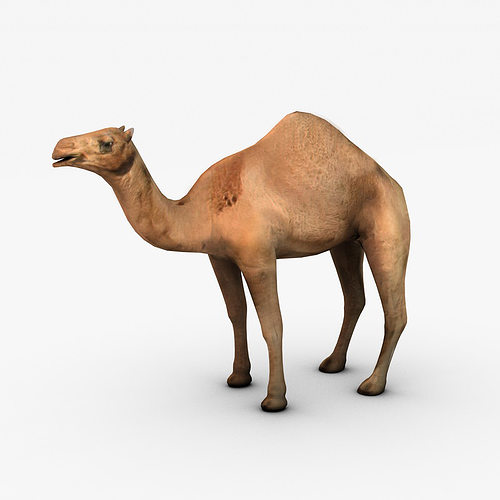 camel 3d model low-poly max obj mtl 3ds fbx c4d 1